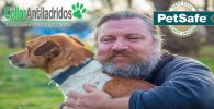 petsafe collar antiladridos